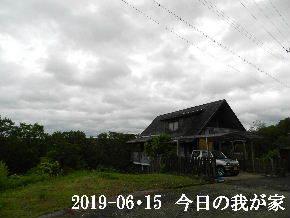 2019-06・15 今日の里山模様・・・ (1).JPG