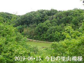 2019-06・15 今日の里山模様・・・ (3).JPG
