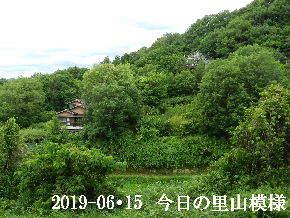2019-06・15 今日の里山模様・・・ (4).JPG