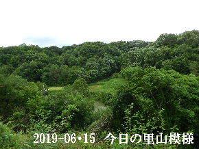 2019-06・15 今日の里山模様・・・ (7).JPG