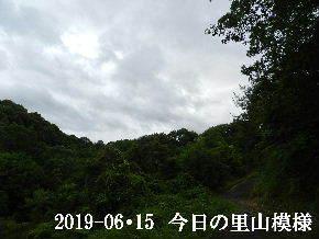 2019-06・15 今日の里山模様・・・ (8).JPG
