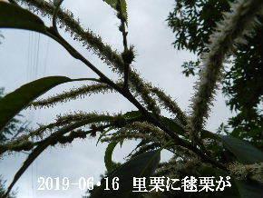 2019-06・16 今日の出遭い・・・ (2).JPG