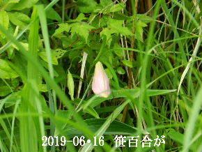 2019-06・16 今日の出遭い・・・ (6).JPG