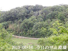 2019-06・16 今日の里山模様・・・ (3).JPG