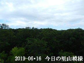 2019-06・16 今日の里山模様・・・ (6).JPG
