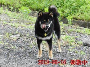 2019-06・16 今日の麻呂 (1).JPG