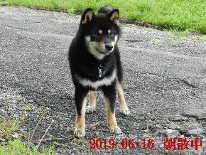2019-06・16 今日の麻呂 (2).JPG