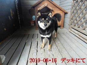 2019-06・16 今日の麻呂 (6).JPG