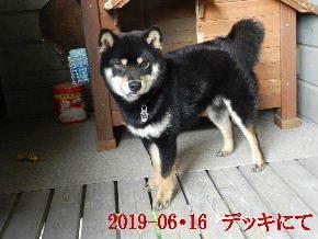 2019-06・16 今日の麻呂 (7).JPG