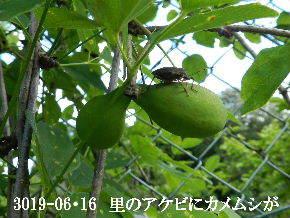 2019-06・16 里山の生物達・・・ (3).jpg