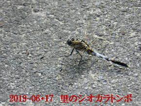 2019-06・17 里の生物達・・・ (1).JPG