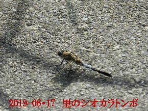 2019-06・17 里の生物達・・・ (3).JPG
