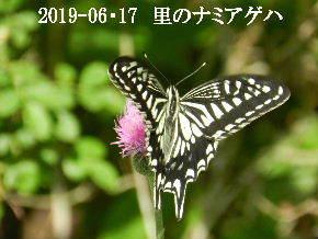 2019-06・17 里の生物達・・・ (4).JPG