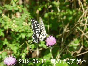 2019-06・17 里の生物達・・・ (5).JPG
