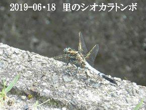 2019-06・18 里の昆虫達・・・ (1).JPG
