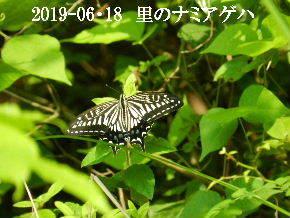 2019-06・18 里の昆虫達・・・ (3).JPG