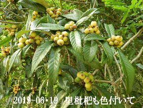2019-06・19 今日の出遭い・・・ (2).JPG