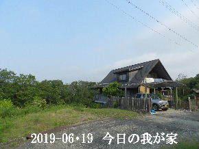 2019-06・19 今日の里山模様・・・ (1).JPG