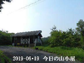 2019-06・19 今日の里山模様・・・ (2).JPG