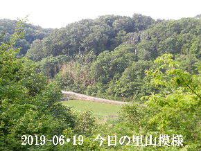 2019-06・19 今日の里山模様・・・ (3).JPG