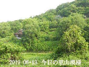 2019-06・19 今日の里山模様・・・ (4).JPG