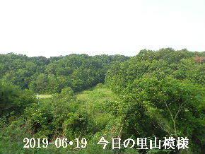 2019-06・19 今日の里山模様・・・ (5).JPG