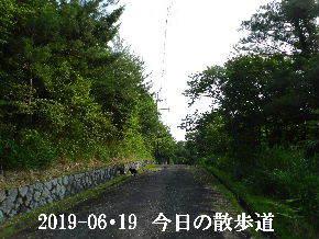 2019-06・19 今日の里山模様・・・ (6).JPG