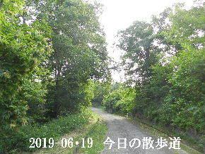 2019-06・19 今日の里山模様・・・ (7).JPG