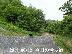 2019-06・19 今日の里山模様・・・ (8).JPG