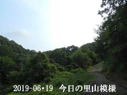 2019-06・19 今日の里山模様・・・ (9).JPG