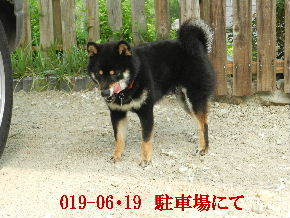 2019-06・19 今日の麻呂 (8).JPG