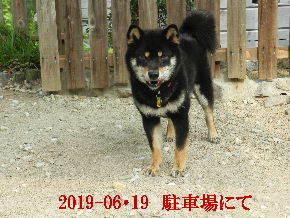 2019-06・19 今日の麻呂 (9).JPG