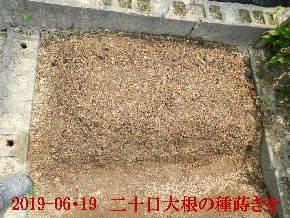 2019-06・19 我が家のスナップ・・・ (1).JPG