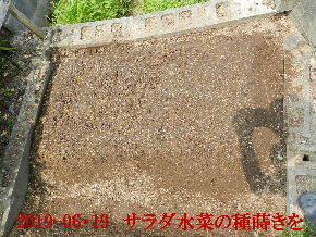 2019-06・19 我が家のスナップ・・・ (2).JPG