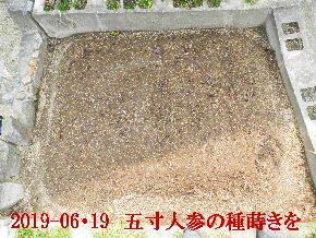 2019-06・19 我が家のスナップ・・・ (3).JPG