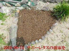 2019-06・19 我が家のスナップ・・・ (5).JPG
