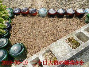 2019-06・19 我が家のスナップ・・・ (6).JPG
