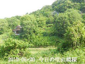 2019-06・20 今日の里山模様・・・ (4).JPG