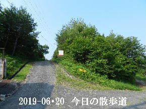 2019-06・20 今日の里山模様・・・ (6).JPG