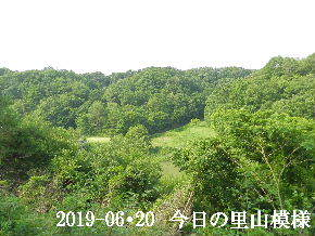 2019-06・20 今日の里山模様・・・ (8).JPG
