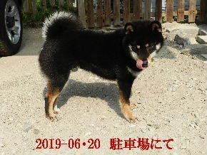 2019-06・20 今日の麻呂 (5).JPG