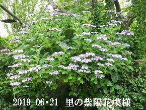 2019-06・21 今日の出遭い・・・ (1).JPG