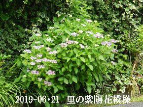 2019-06・21 今日の出遭い・・・ (2).JPG