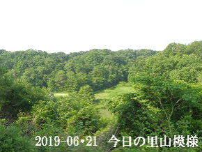 2019-06・21 今日の里山模様・・・ (5).JPG