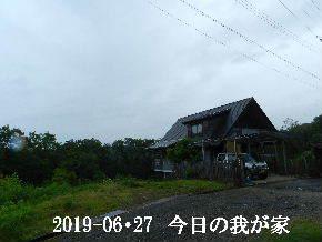 2019-06・27 今日の里山模様・・・ (1).JPG