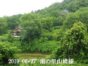 2019-06・27 今日の里山模様・・・ (4).JPG