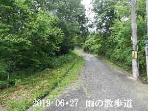 2019-06・27 今日の里山模様・・・ (7).JPG
