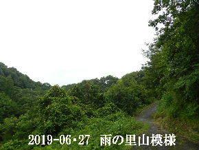 2019-06・27 今日の里山模様・・・ (8).JPG