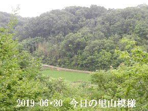 2019-06・30 今日の里山模様・・・ (3).JPG
