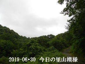 2019-06・30 今日の里山模様・・・ (6).JPG